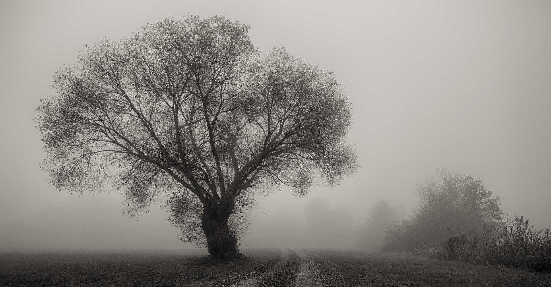 Herbstgedicht - Baum